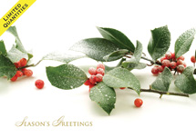 Frosted Berries Christmas Cards